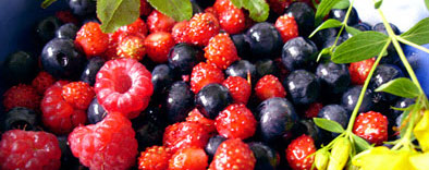 Berries plant of the month soft fruit November 2010