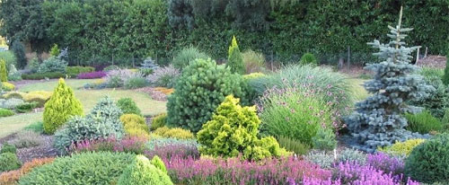 Conifers plant of the month 2011