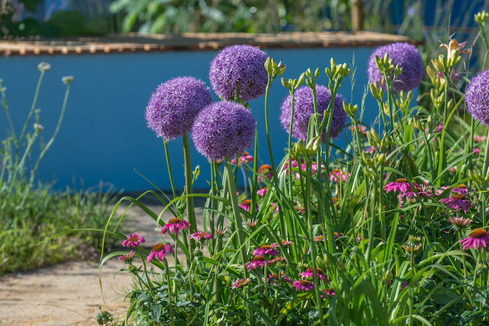 Cancer Research UK's Life Garden RHS Chelsea Flower Show 2016