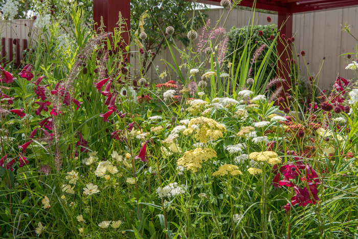 RHS Show flower show gardens 2016 The Squires Garden