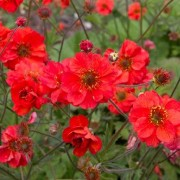 (17/06/2020) Geum 'Fiery Tempest' added by Shoot)