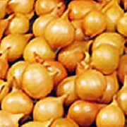 'Golden Gourmet' is a small bulbous perennial with strap-like green leaves cultivated as an edible vegetable with flavour somewhere between an onoin and garlic. This is a French style variety forming oval, golden bulbs. Allium cepa 'Golden Gourmet' added by Shoot)