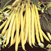 'Valdor' is a half-hardy, dwarf, climbing annual with white, pink or red flowers followed by golden-yellow pods in summer that are slow to produce seeds. It crops  over a long period if picked regularly. It also has good virus resistance.  Phaseolus vulgaris 'Valdor' added by Shoot)