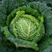 Brassica oleracea added by Shoot)