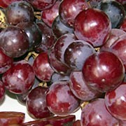 'Crimson Seedless' is a popular grape vine with large bunches of pinky-red, seedless, sweet grapes that are ready to harvest in early autumn. Vitis vinifera 'Crimson Seedless' added by Shoot)