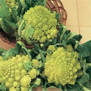 'Romanesco Early' is a vegetable plant that forms densely packed edible, heads of crisp, lime-green florets, borne on a sturdy stalk above green, basal leaves in summer and autumn.  Brassica oleracea botrytis 'Romanesco Early' added by Shoot)