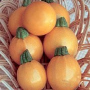 'One Ball' F1 is a perennial plant widely cultivated as an annual with green leaves, producing yellow flowers that form yellow, edible fruits in summer and autumn. Good resistance to Cucumber yellow mosaic virus and Watermelon mosaic virus.  Cucurbita pepo 'One Ball' added by Shoot)