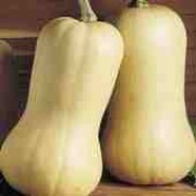 'Waltham', the Eden Project range, is a large, elongated pear-shaped squash with a hard, smooth, marrow-like striped rind and yellow flesh, high in beta carotene. A butternut-type squash that stores well. Cucurbita moschata 'Waltham' added by Shoot)