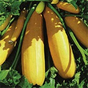'Atena' is a perennial widely cultivated as an annual forming edible, bottle-shaped yellow fruit in the summer and early autumn. Cucurbita pepo 'Atena' added by Shoot)