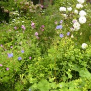 Front garden Added by Fiona