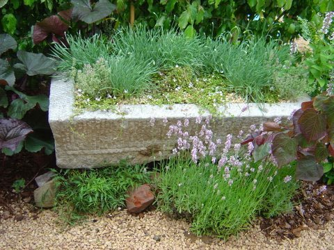 Container planting combinations
