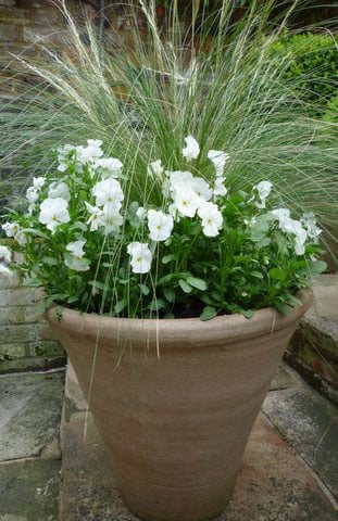Container planting combinations shoot - Best flower combinations for containers ...