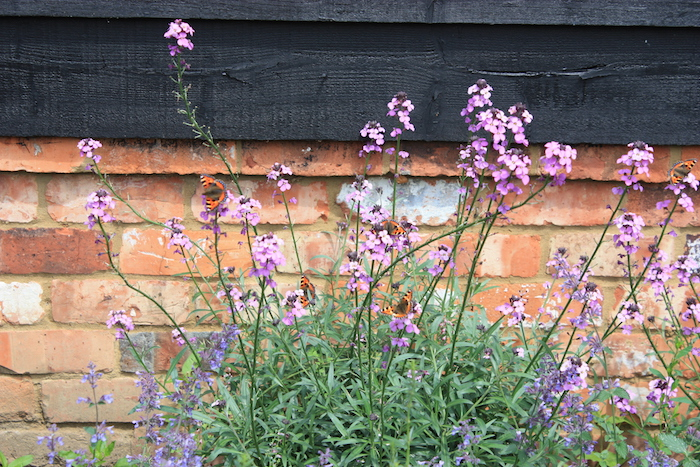 Scented border planting for a sunny garden