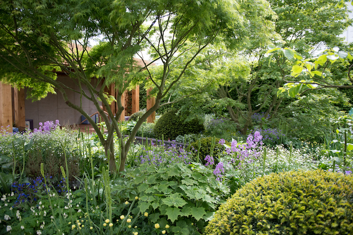 The Morgan Stanley Garden RHS Chelsea Flower Show 2016