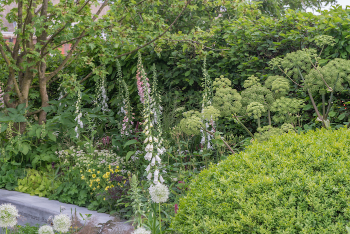The Jo Whiley Scent Garden By garden designer Tamara Bridge