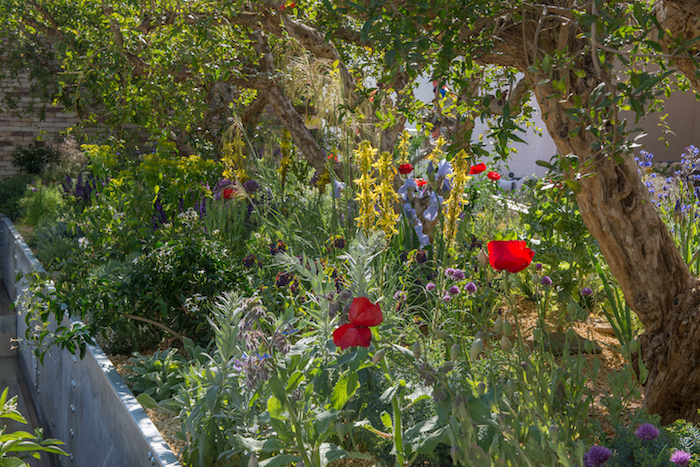 The Lemon Tree Trust Garden Chelsea Flower Show 2018 by garden designer Tom Massey