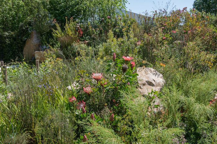 A South African Wine Estate Garden Chelsea Flower Show 2018 by west London based garden designer Jonathan Snow