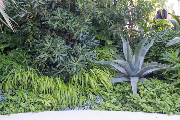 The Spirit of Cornwall Garden Chelsea Flower Show 2018 by garden designer Stuart Charles Towner