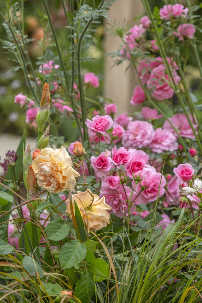 The Wedgwood Garden by garden designer Jo Thompson Chelsea Flower Show 2019