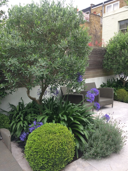 South London Town Garden by West Sussex garden designer Christine Fowler