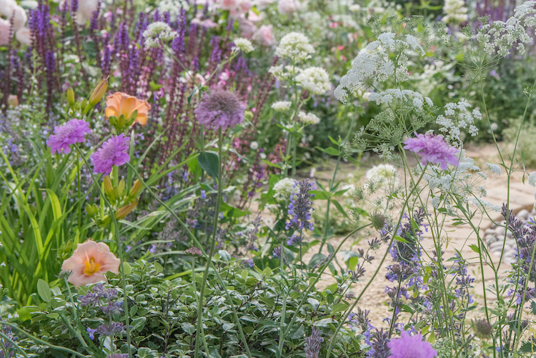 Best of Both Worlds Garden RHS Hampton Court Flower Show 2018 by garden designer Rosemary Coldstream