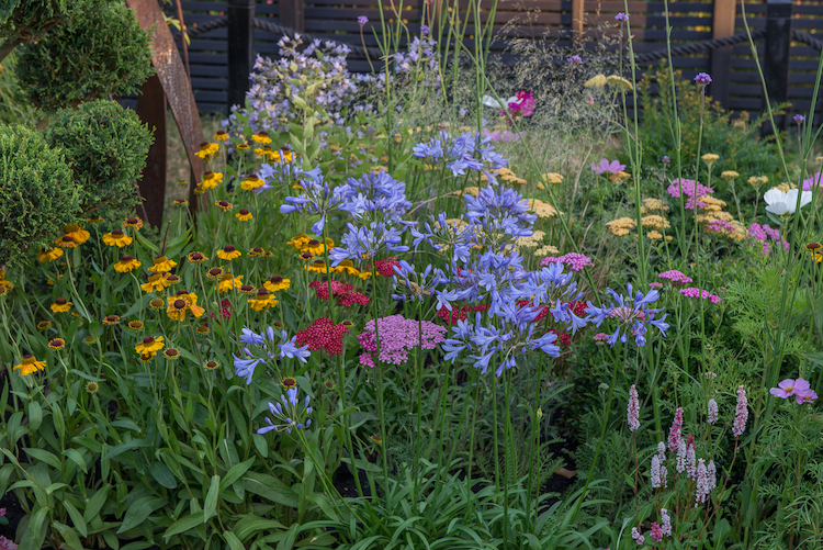 Brilliance in Bloom Garden Hampton Court Flower Show 2018 by garden designer Charlie Bloom