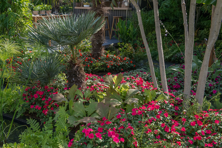 B&Q's Bursting Busy Lizzie Garden Hampton Court Flower Show 2018 by garden designer Matthew Childs