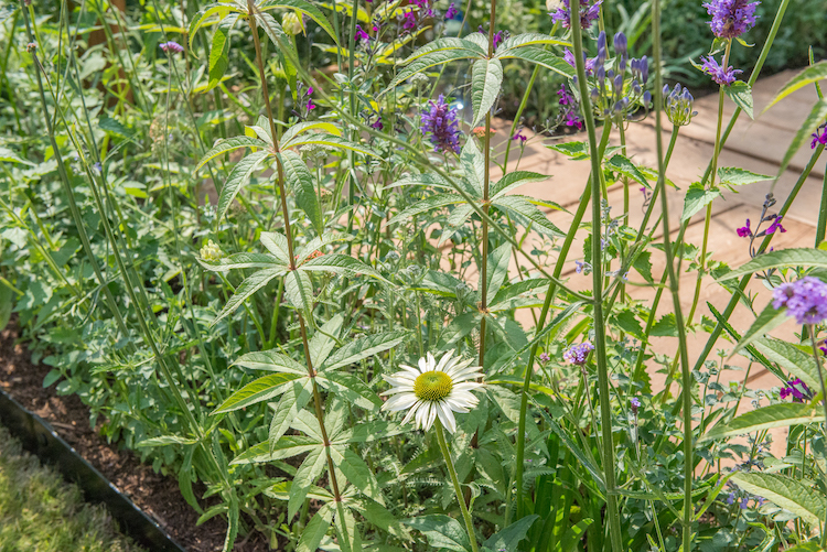 Southend Young Offenders 'A Place to Think' Hampton Court Flower Show 2018 by garden designer James Callicott
