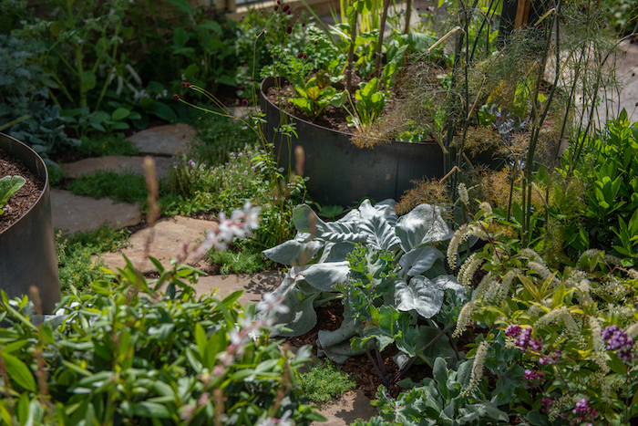 Believe in Tomorrow Garden RHS Hampton Court Flower Show 2019 by Garden Designer Seonaid Royall