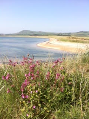 Largo Bay (near here) with Red Campion