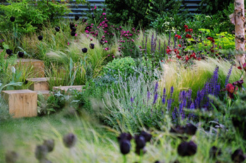 Andy sturgeon steps and lush planting