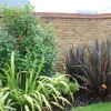 Phormium tenax Purpureum Group (New Zealand flax Purpureum Group)