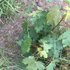 Is this a weed? It was growing in my 'Grasses flower bed'