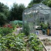 The Veg Patch