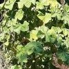 Can anyone identify this plant