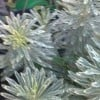 Can anyone please identify this plant? (20/11/2011)
