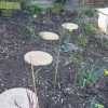 Re: Re: Re: Small damp,part shady,north facing back garden!!