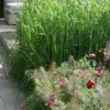 The Laurent-Perrier Garden - Chelsea Flower Show 2009